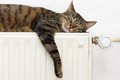 Cat relaxing on a radiator the tiger tabby warm Royalty Free Stock Images