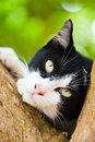 Cat relaxing on tree Stock Photography