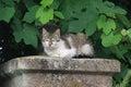Cat resting beautiful on porch nphoto taken on july Stock Photos