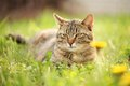 Cat resting in spring grass Royalty Free Stock Images
