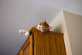 Cat resting on top of cabinet