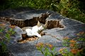 Cat resting on a tree stump Royalty Free Stock Photography