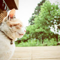 A cat with retro effect filter Stock Photography