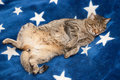 Cat's dreams time Royalty Free Stock Photography