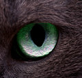 Cat's eye Royalty Free Stock Photos