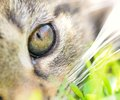 Cat s eye closeup shot of young Royalty Free Stock Image