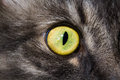 Cat`s eye large Royalty Free Stock Photo