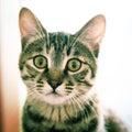 Mačky pozerá na vy