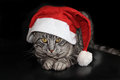 Cat with santa claus hat on black background christmas card design Royalty Free Stock Photo