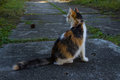 Cat seen from behind image of a crossbreed orange grey and white Royalty Free Stock Image