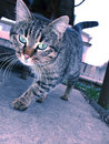Cat series a on the street Royalty Free Stock Images