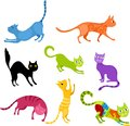 Cat set Royalty Free Stock Photo