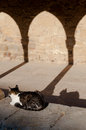 Cat and shadow resting at sunset under arcade white grey Stock Photos