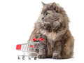 Cat with Shopping Cart Royalty Free Stock Photo