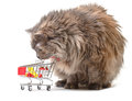 Cat with Shopping Cart Stock Photography