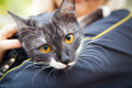 A cat on a shoulder Royalty Free Stock Images