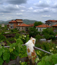 Cat sightseeing on terrace fence picture taken on may th krichim town bulgaria Royalty Free Stock Image