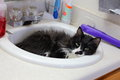 Cat in sink a black and white laying and sleeping a bathroom Royalty Free Stock Photos