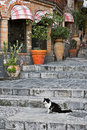 Cat sitting on alley steps Royalty Free Stock Photos