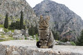 Cat sitting ancient column temple apollo delphi greece Stock Images