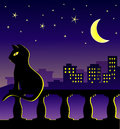 Cat sitting on the balcony in midnight undre the stars and half moon with suburban background Royalty Free Stock Photography