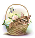 Cat sitting in a basket with roses illustration of the tabby Royalty Free Stock Photo