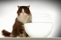 Cat sitting by empty fishbowl against white background Stock Images