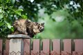 Cat sitting on the fence Royalty Free Stock Photos