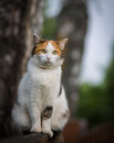 Cat sitting on a fence in cloudy day outdoors shot Stock Photos