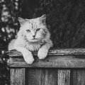 Cat sitting on the fence a and looking at camera black and white colors Stock Photos