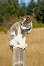 Cat sitting on fence post cute looking to the left Royalty Free Stock Image