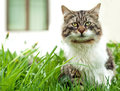 Cat sitting in the grass front of house Royalty Free Stock Photography