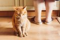 Cat sitting near female foots vermelha Foto de Stock Royalty Free
