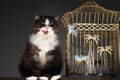 Cat sitting next to empty birdcage against gray background Royalty Free Stock Photos
