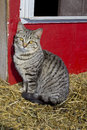 Cat sitting by a red wall vertical picture of grey and black striped in the straw in front of Stock Photo