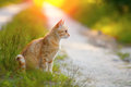 Cat sitting on the road red at sunset Royalty Free Stock Photo