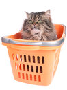 Cat sitting in shopping basket Royalty Free Stock Photo