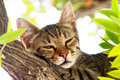 A Cat sitting on a tree Royalty Free Stock Photos