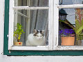 Cat sitting on a window Royalty Free Stock Image