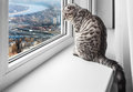 Cat sitting on a window sill and looking at the rainy city focus the eyes of Royalty Free Stock Images