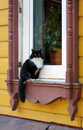 A cat sitting on the window sill of wooden house Royalty Free Stock Photos