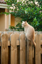 Cat sitting wooden fence Stock Photos