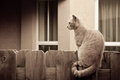Cat sitting wooden fence Stock Image