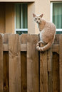 Cat sitting wooden fence Royalty Free Stock Photography
