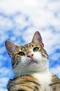 Cat with sky background Royalty Free Stock Photo