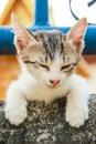Cat sleep Foto de Stock Royalty Free