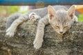 Cat sleep Imagens de Stock