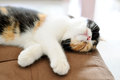 Cat sleep Royalty Free Stock Photo