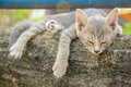 Cat sleep on the stone wall Stock Images