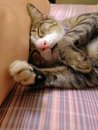 Cat sleeping on bed at home Stock Photography